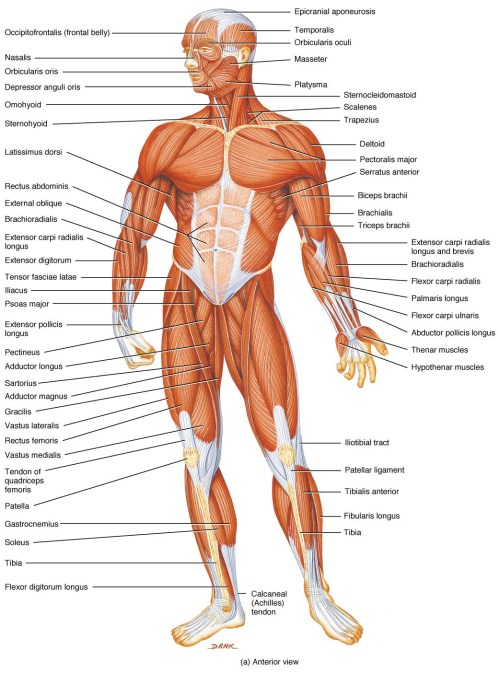small resolution of  human body pictures science for new page 2