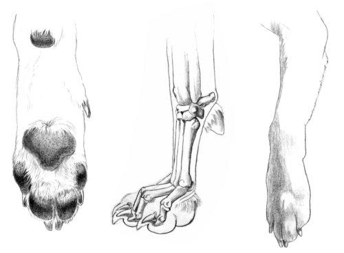 Chapter 3. Animal anatomy