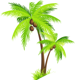 palm tree with coconuts png clipart picture [ 6146 x 6787 Pixel ]
