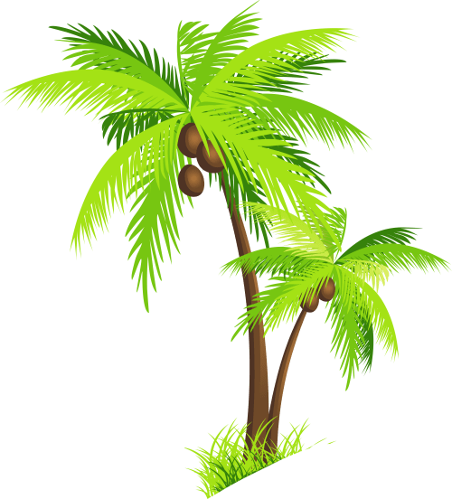 small resolution of palm tree with coconuts png clipart picture