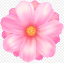 Free Pink Flowers Transparent Background Download Free Clip Art Free Clip Art on Clipart Library