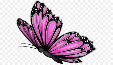 Free Transparent Butterfly Images Download Free Clip Art Free Clip Art on Clipart Library