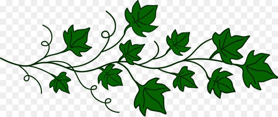common ivy vine plant