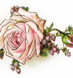 vintage flower clipart [ 1728 x 984 Pixel ]