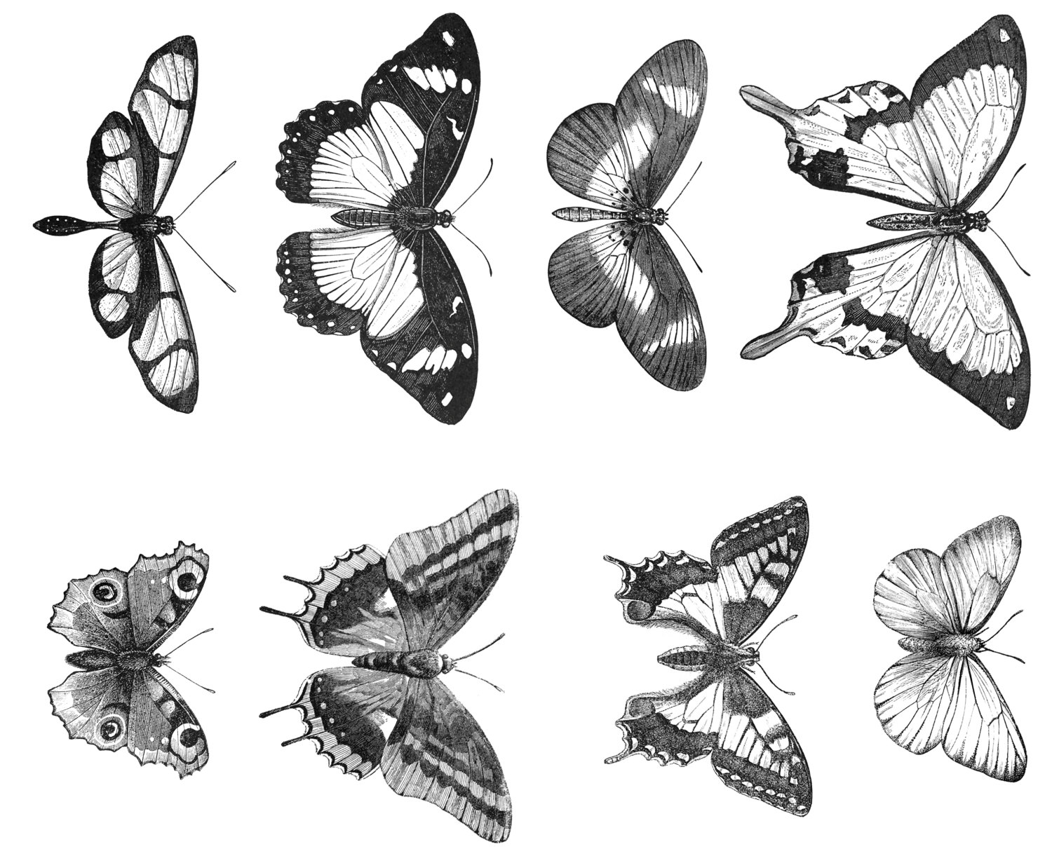 Victorian Butterfly Clipart
