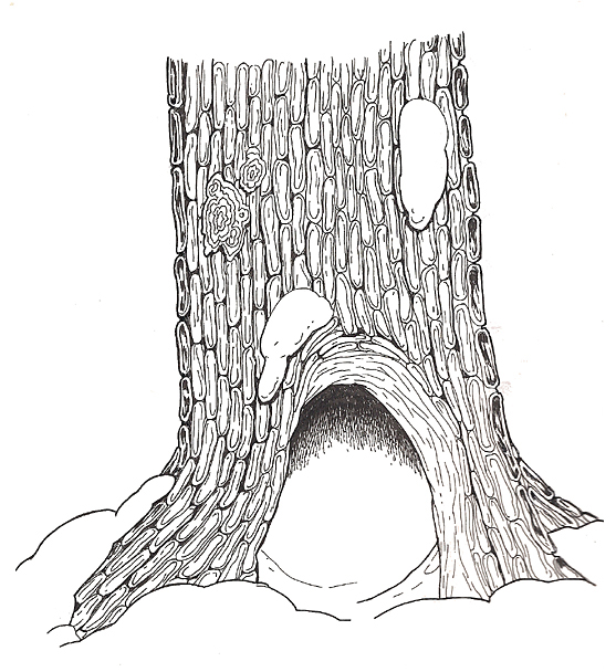 Free Hollow Tree Cliparts, Download Free Clip Art, Free