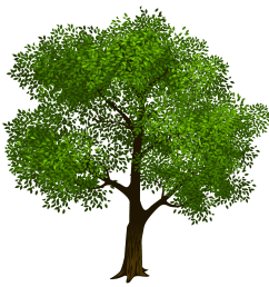 tree clipart transparent green tree clipart picture png m 1423128566 [ 5016 x 4919 Pixel ]