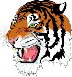 tiger [ 3600 x 3600 Pixel ]