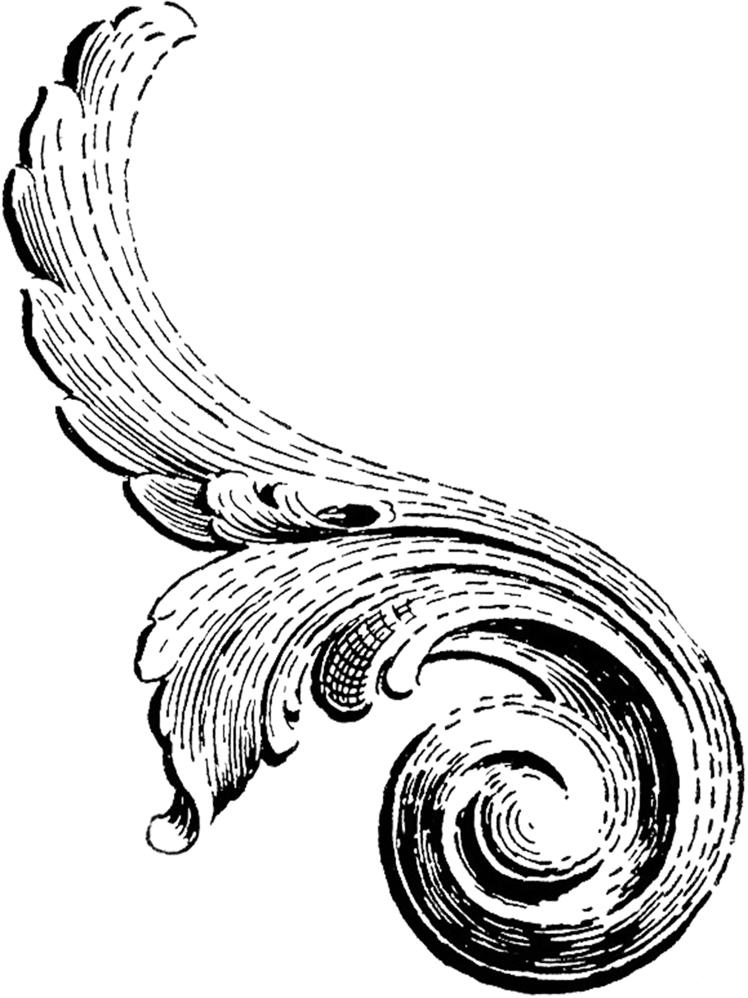Scroll Graphic