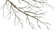 Winter Branch PNG Clipart Image - Clip Art Library