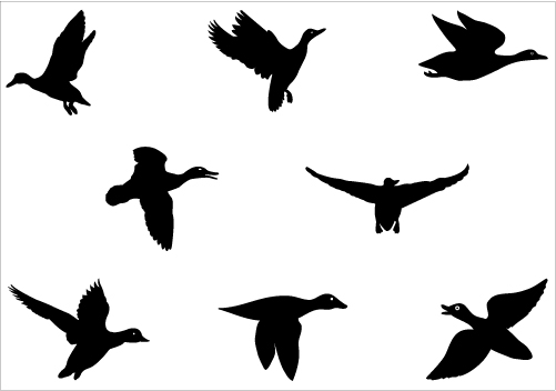 free flying duck cliparts
