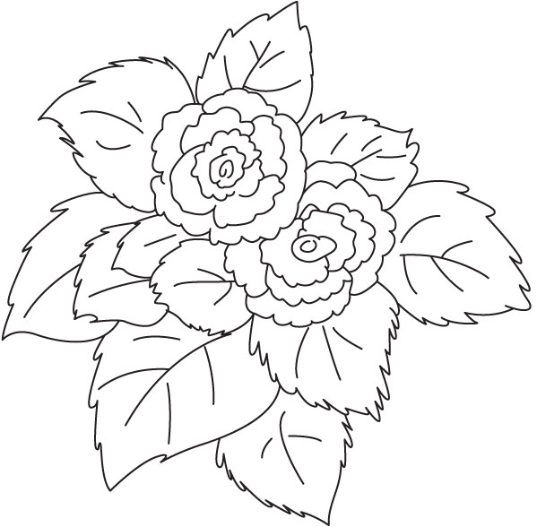 Free Begonia Flower Cliparts, Download Free Clip Art, Free