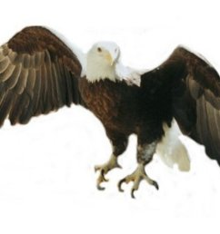 clipart american eagle american [ 1024 x 768 Pixel ]