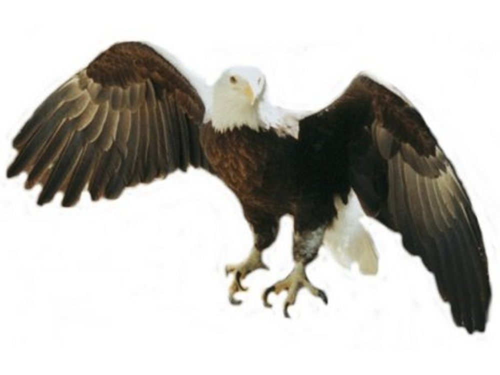 medium resolution of clipart american eagle american