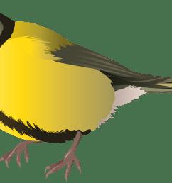yellow bird png clipart [ 3000 x 1646 Pixel ]