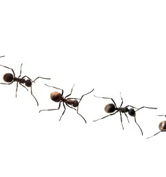 ant team clipart marching [ 1920 x 1280 Pixel ]