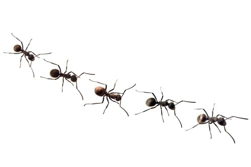 small resolution of ant team clipart marching