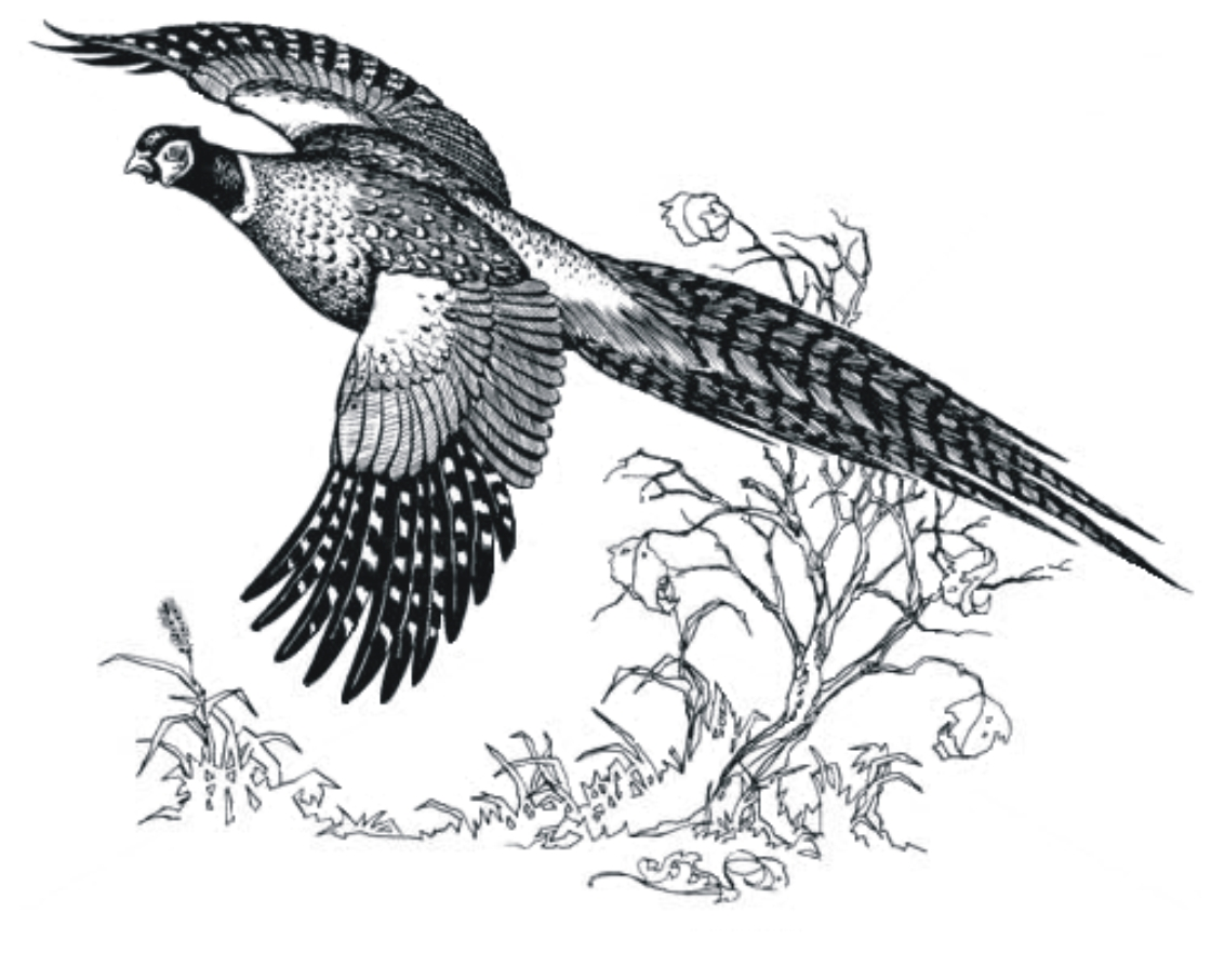 Free Quail Hunting Cliparts Download Free Clip Art Free