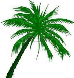 free palm tree clip art image [ 1158 x 1200 Pixel ]