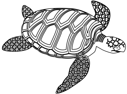 small resolution of turtles