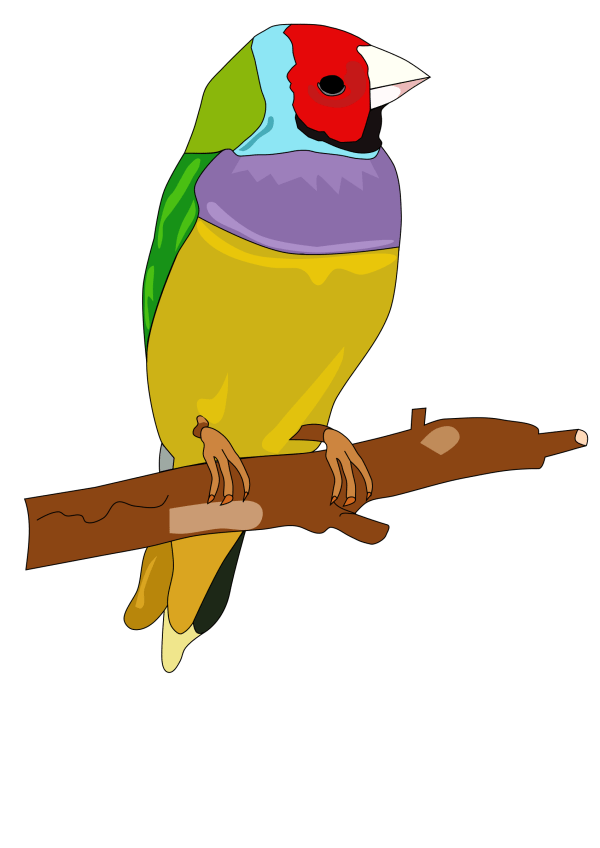 Free Parrot Toy Cliparts Clip Art