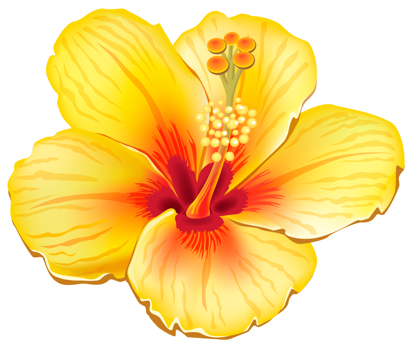 hight resolution of yellow exotic flower png clipart picture