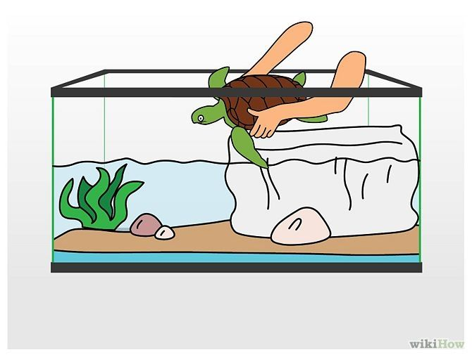 Free Turtle Tank Cliparts Download Free Clip Art Free