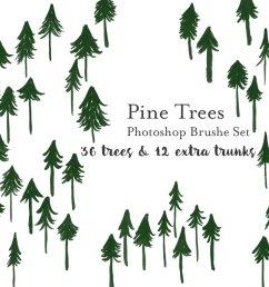 pine [ 1000 x 1000 Pixel ]