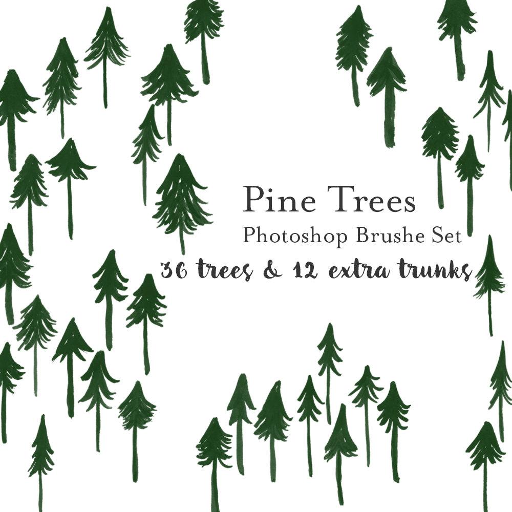 hight resolution of pine