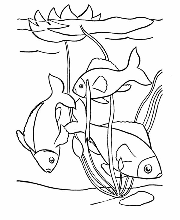 Free Fish Pond Cliparts, Download Free Clip Art, Free Clip