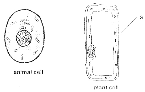 Free Animal Cell Cliparts, Download Free Clip Art, Free