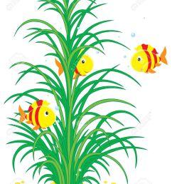 under water seaweed clipart [ 1013 x 1300 Pixel ]