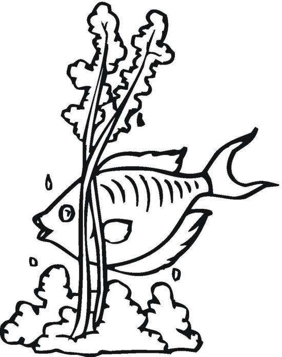 Free Fish Seaweed Cliparts, Download Free Clip Art, Free