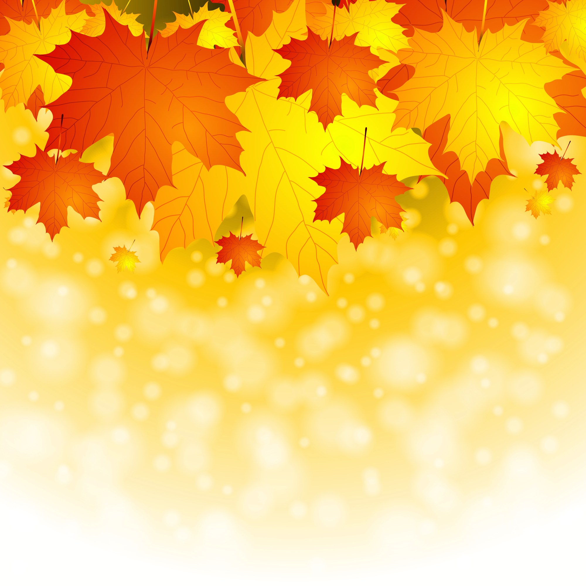 hight resolution of fall leaf backgrounds group