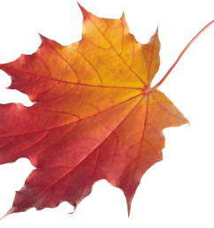 fall background cliparts 2674056 license personal use  [ 3101 x 2136 Pixel ]