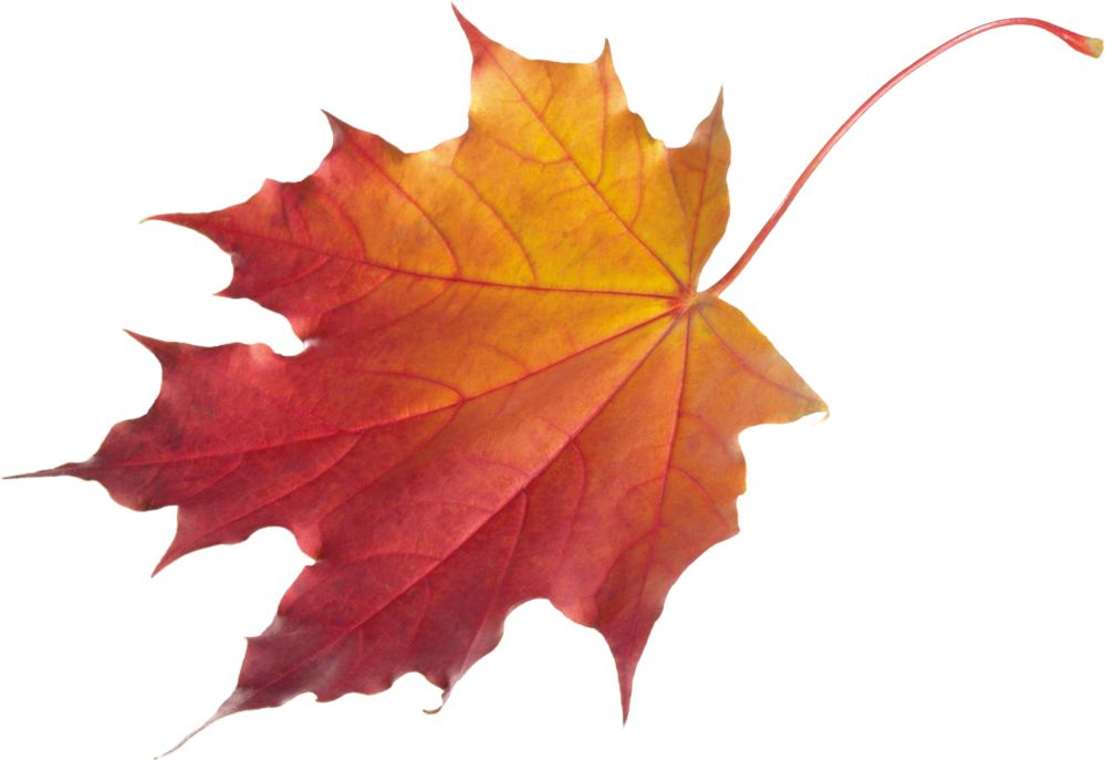medium resolution of fall background cliparts 2674056 license personal use