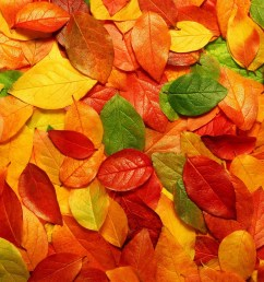 fall background cliparts 2674059 license personal use  [ 2560 x 1600 Pixel ]