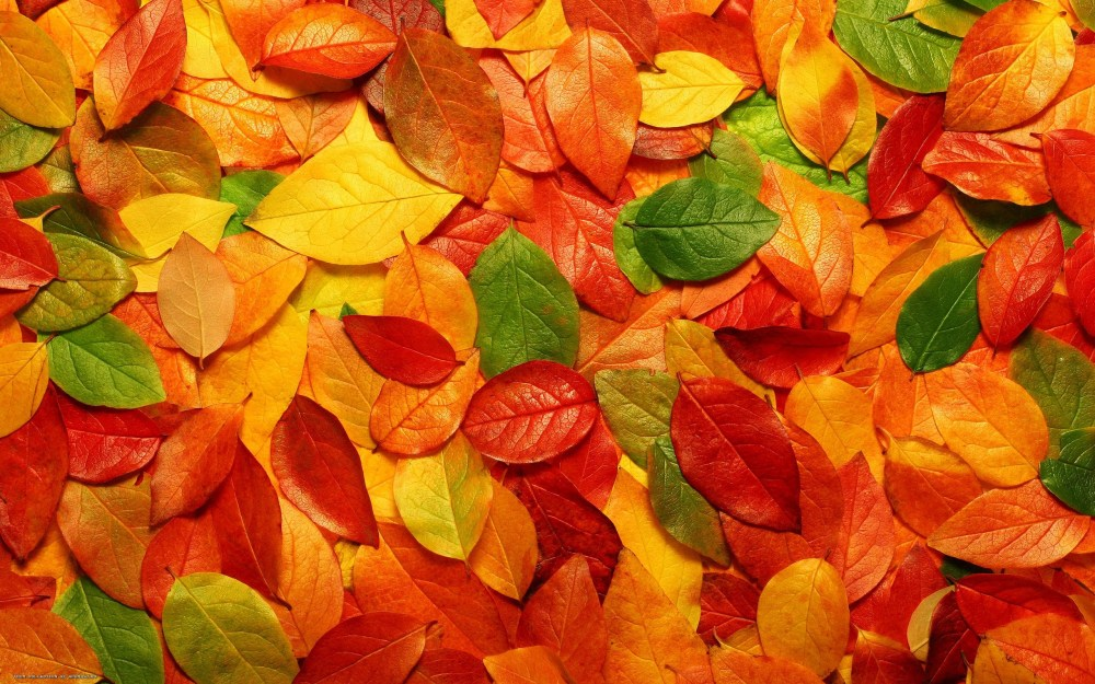 medium resolution of fall background cliparts 2674059 license personal use