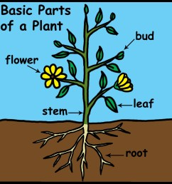 parts of a plant for kids clipart [ 1200 x 1200 Pixel ]
