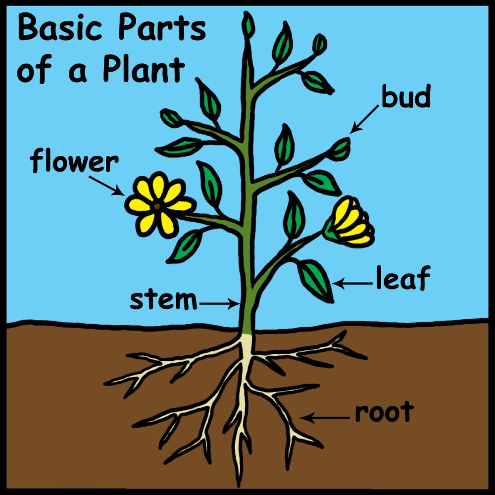 medium resolution of parts of a plant for kids clipart