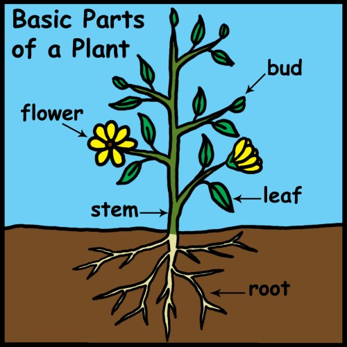 small resolution of parts of a plant for kids clipart