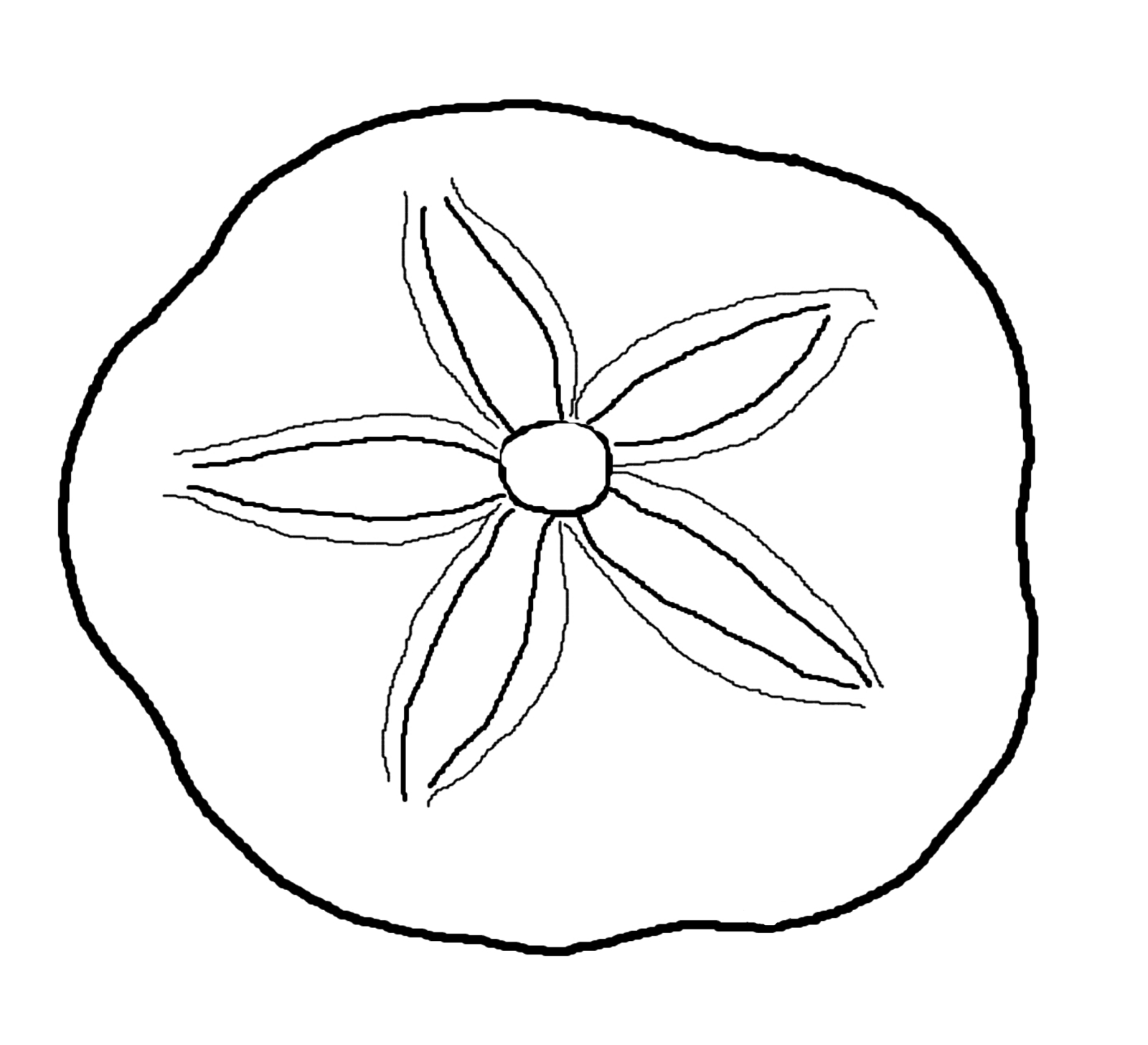 Sand Dollar Clipart Black And White