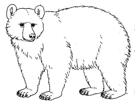 Free Bear Drawing Cliparts, Download Free Clip Art, Free