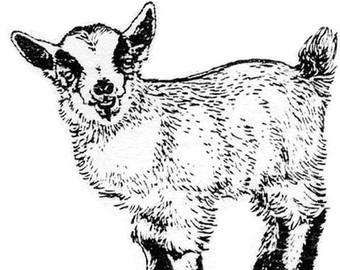 Pygmy goat gifts