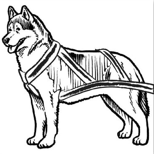 Husky Dog Clipart