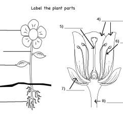 Parts Of A Flower Diagram For Kids 2005 Nissan Pathfinder Trailer Wiring Free Simple Plant Cliparts, Download Clip Art, Art On Clipart Library