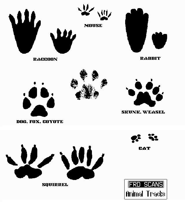 Free Animal Footprints Cliparts, Download Free Clip Art