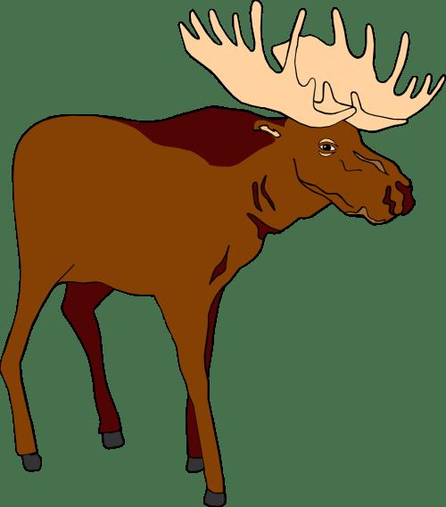 small resolution of moose