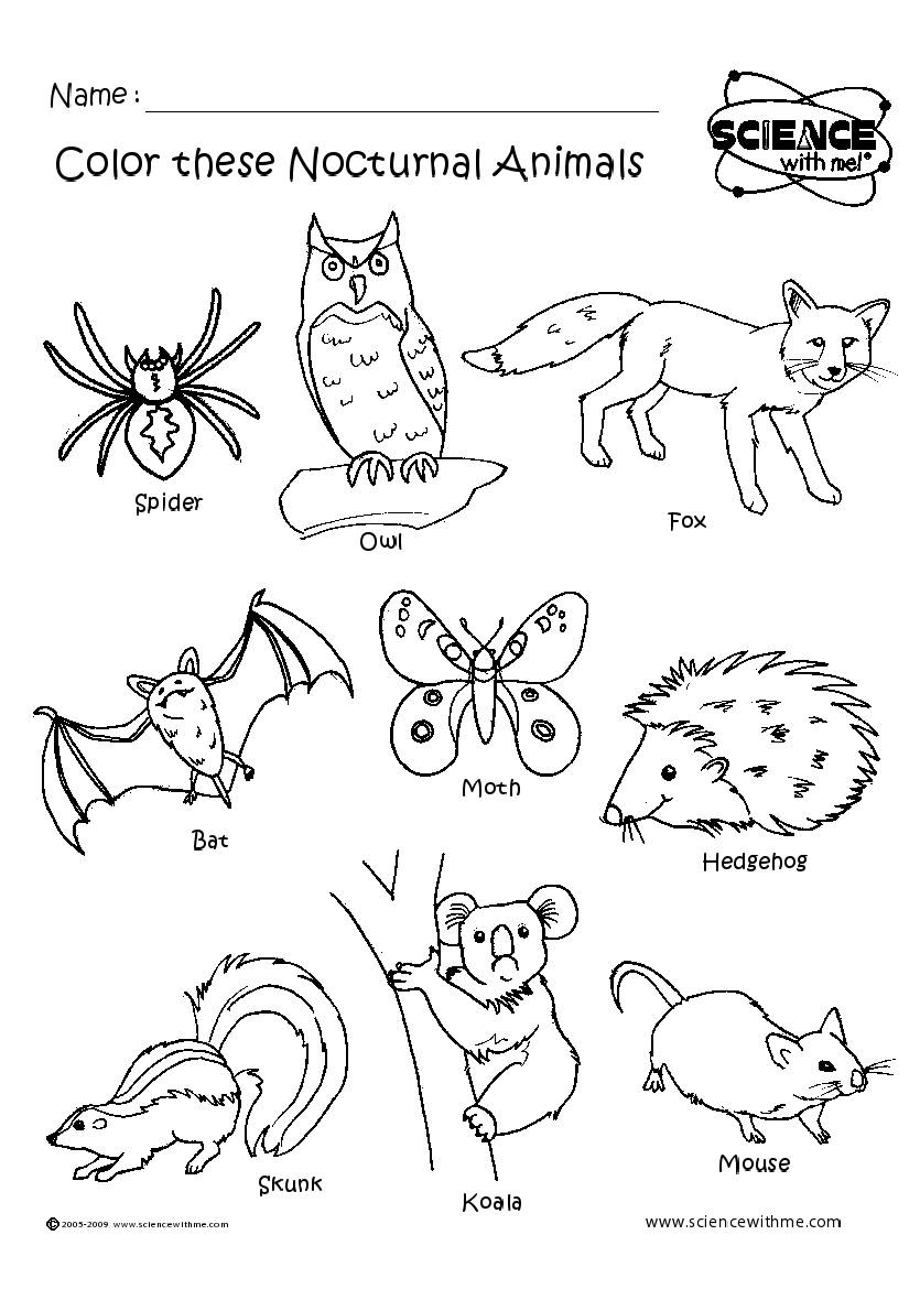 Free Nighttime Animals Cliparts, Download Free Clip Art