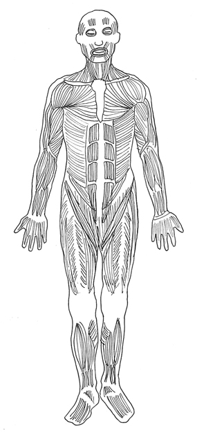Body muscles clipart